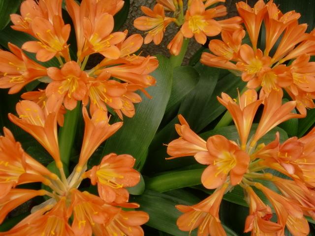 涙の中の虹を見つけに*:・゜.☆ ~青森市セラピールーム アルクトゥールス~-flower