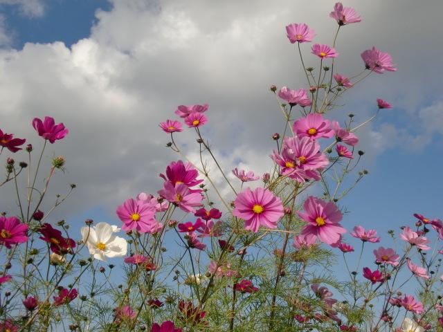 涙の中の虹を見つけに*:・゜.☆ ~青森市セラピールーム アルクトゥールス~-cosmos