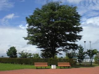 涙の中の虹を見つけに~青森市セラピールーム アルクトゥールス~  -tree