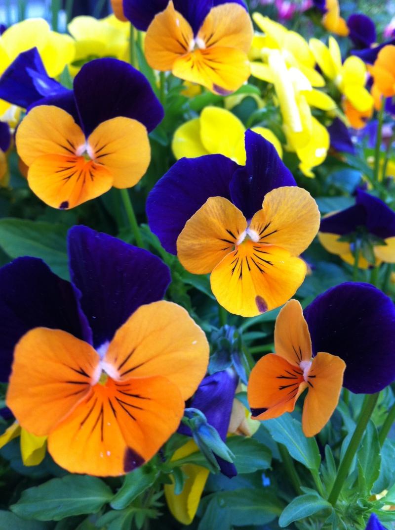 涙の中の虹を見つけに~青森市セラピールーム アルクトゥールス~  -flower
