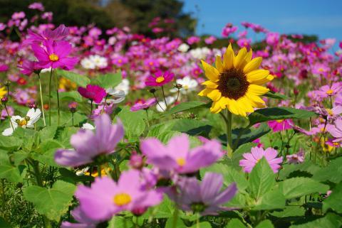 花さじき6