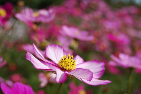 花さじき9