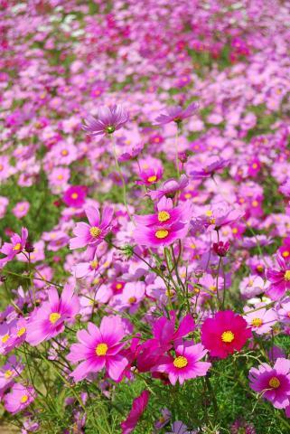 花さじき10