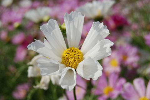 花さじき12
