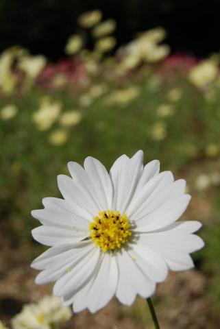 花さじき18