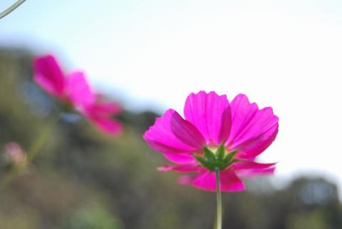 花さじき31