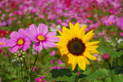 花さじき34
