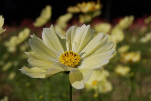 花さじき38