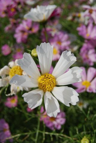 花さじき43