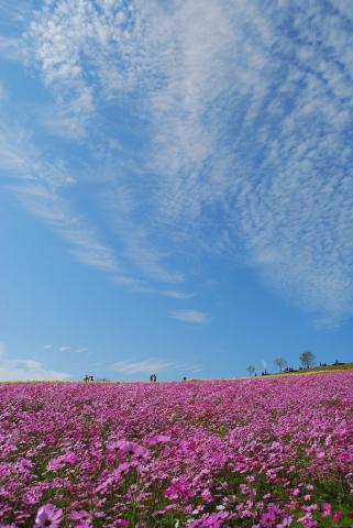花さじき47