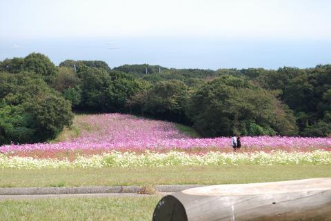 花さじき48