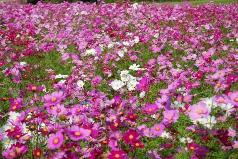 花さじき41