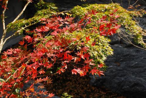 大釜の滝7