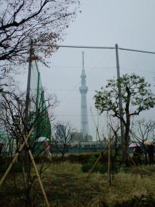 2012.01.23曇天のスカイツリー