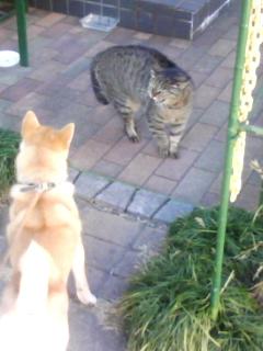 犬猫のあいさつ