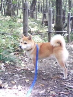 秋の里山公園1