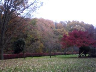 紅葉の里山