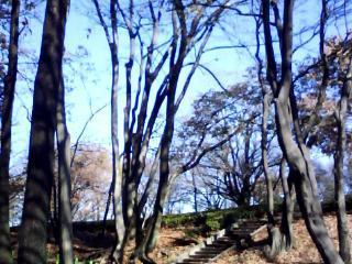 公園からの青空