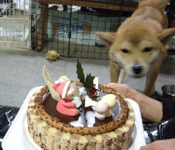 はじめてのクリスマスケーキ