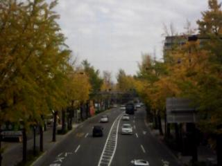 歩道橋からの銀杏並木