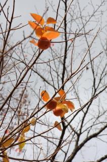 2008_11_19_b.jpg