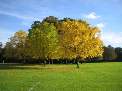 Gunnersbury Park 紅葉