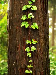 森の写真絵本 3