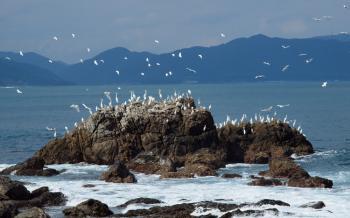 egrets en masse 4