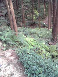 日和田山Image083