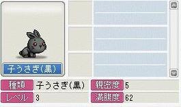 子ウサギ(黒)