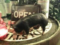 バル 黒豚