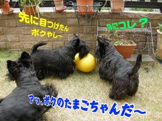 dog212