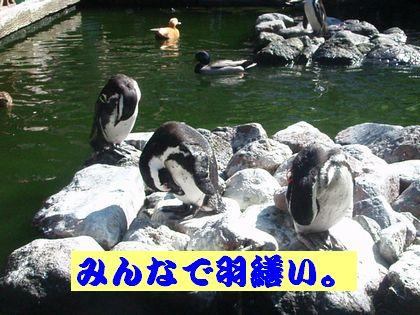 ペンギンさん達