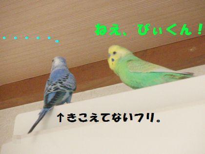 同時放鳥ー1