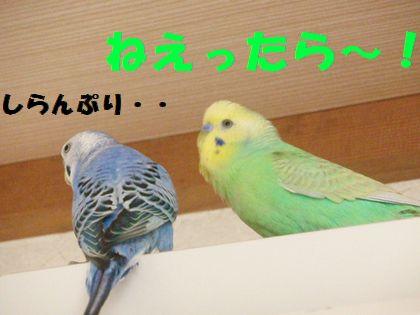 同時放鳥ー4