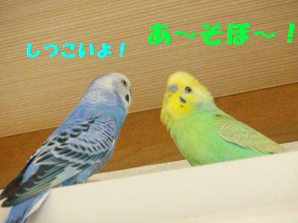 同時放鳥ー5