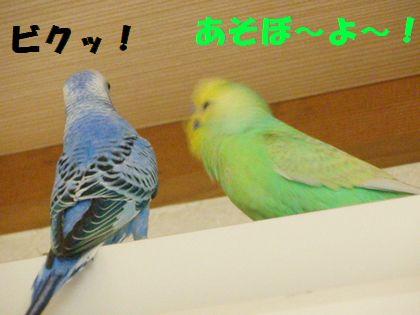 同時放鳥ー3