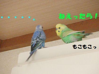 同時放鳥ー2