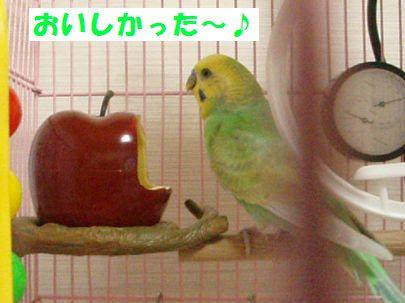 りんごー3