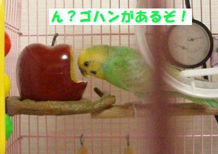 りんごー1