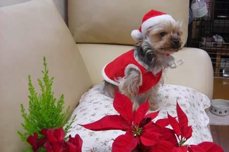 クリスマス写真3