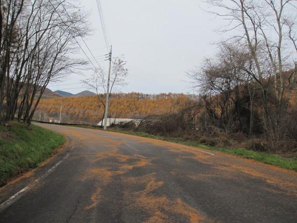 道を彩る落葉松