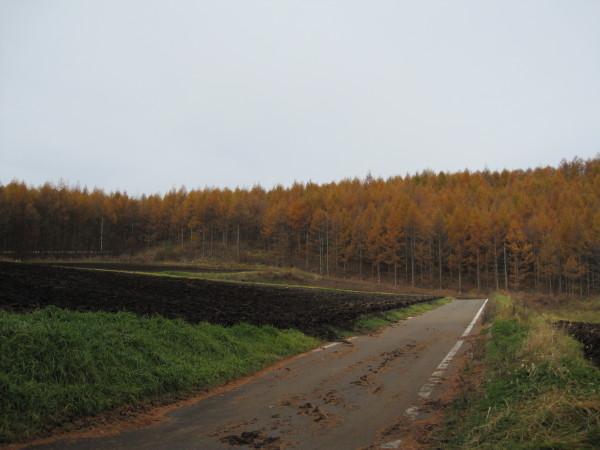 キャベツ畑と落葉松