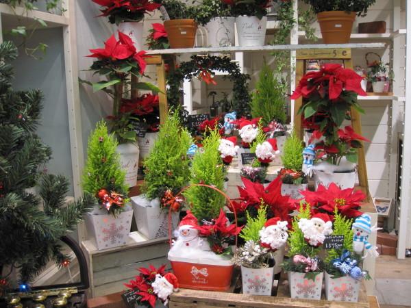 お花屋さんを飾るクリスマスツリー