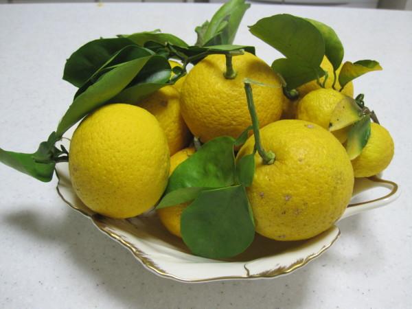 枝付きの見事な柚子