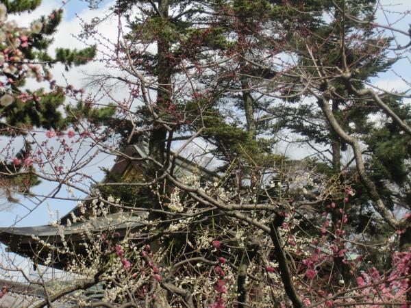 松と梅と甍