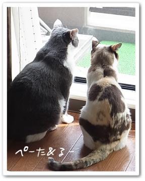 ぺーた&るー 窓辺で