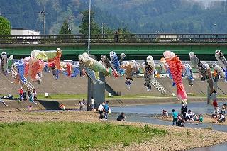 加茂川の鯉のぼり2