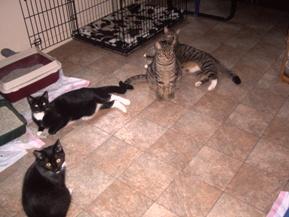 cat 072409