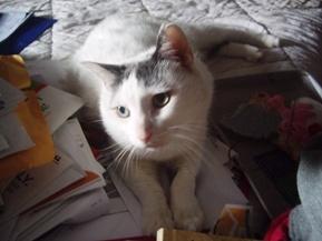 cat2 072409
